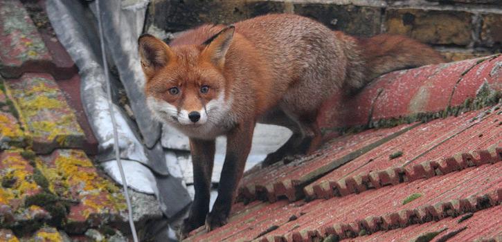 Dach Tiere Schutz
